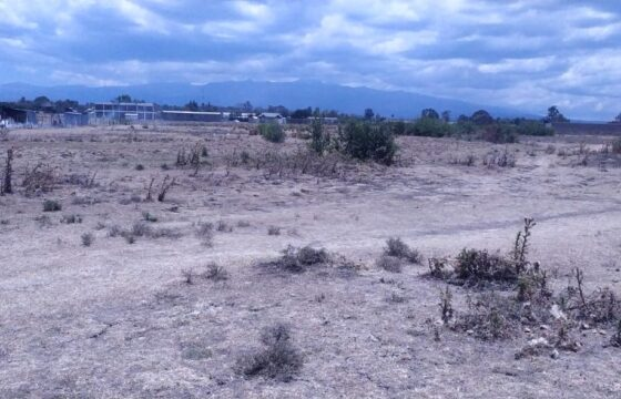 Five Acres of Land FOR SALE, Nanyuki