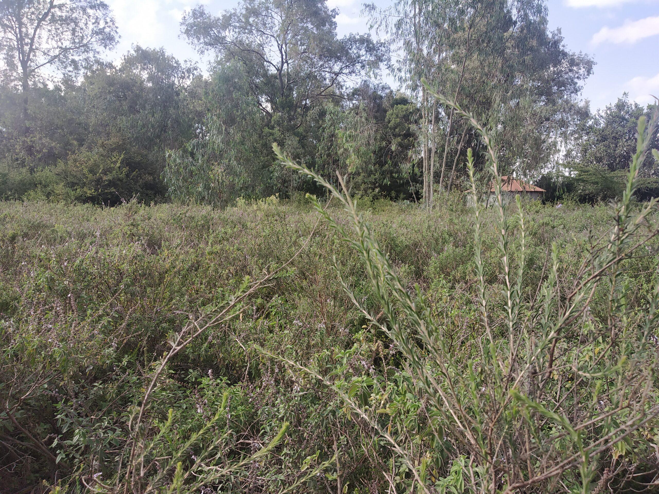 Five [5] Acres FOR SALE, Karen, Nairobi
